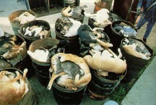 Mistreatment of animals. When there is an over-population of animals, this is what happens to them at the shelters. These poor unwanted animals end up being euthanized (put down) because there is no room at the shelters and not enough funding to keep them alive in the hopes that someone will give them a home. This is a horrific scene of what becomes of them.