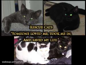 These are a few of the cats that I've had over the years. They are all cats that have been saved from having a short-lived life in a shelter. Animals such as these deserve a nice life and to be cared for.