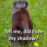 "Groundhog standing as if asking ""did I see my shadow?"""